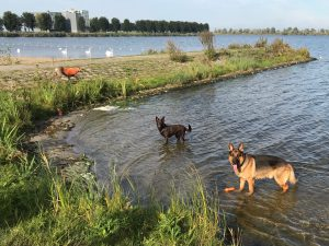 GRATIS K9 Club Winterwandeling 7k @ Boathouse Almere