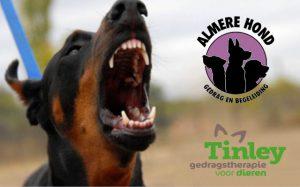 Gedragscursus Uitvallende Hond @ Dierenasiel Almere