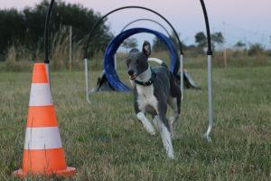 Workshop Hoopers Amstelveen @ Dog Talk Amstelveen